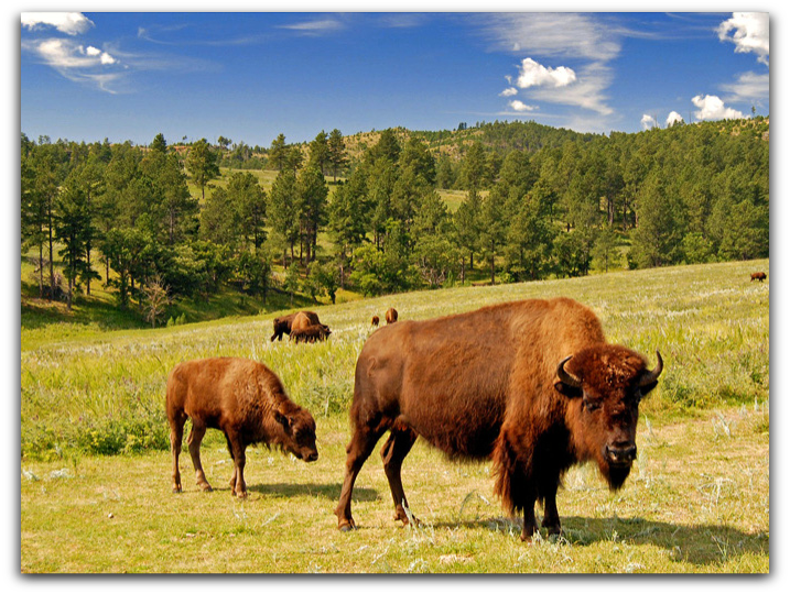 So this is the reason to Visit -Custer State Park-