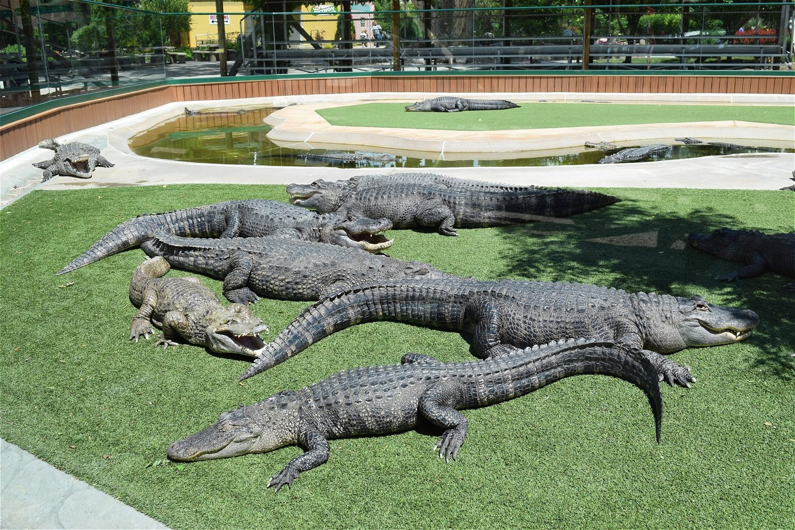 Reptile Gardens near Rapid City Hotels